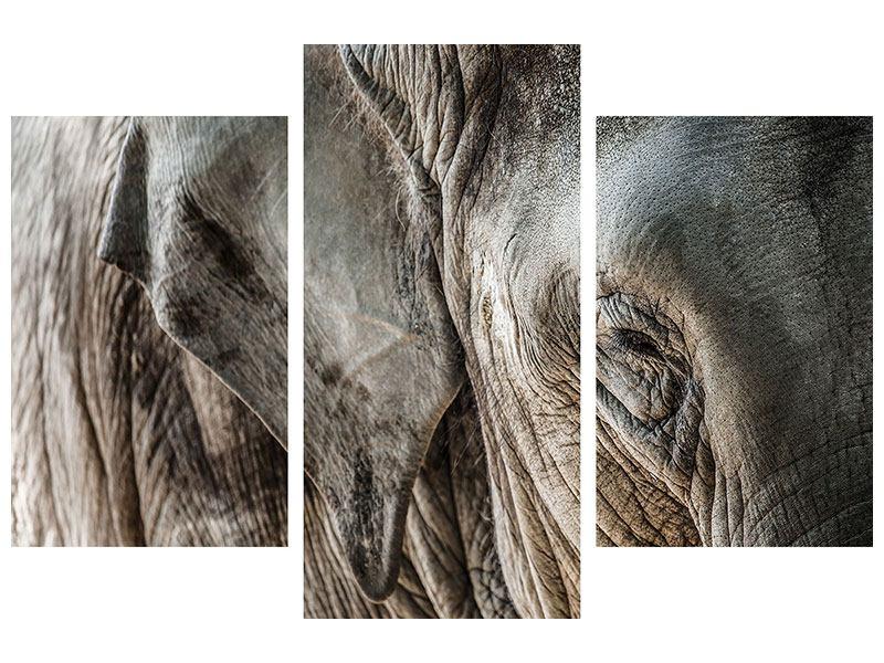 Metallic-Bild 3-teilig modern Close Up Elefant