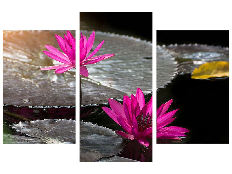 Metallic-Bild 3-teilig modern Seerosen im Morgentau
