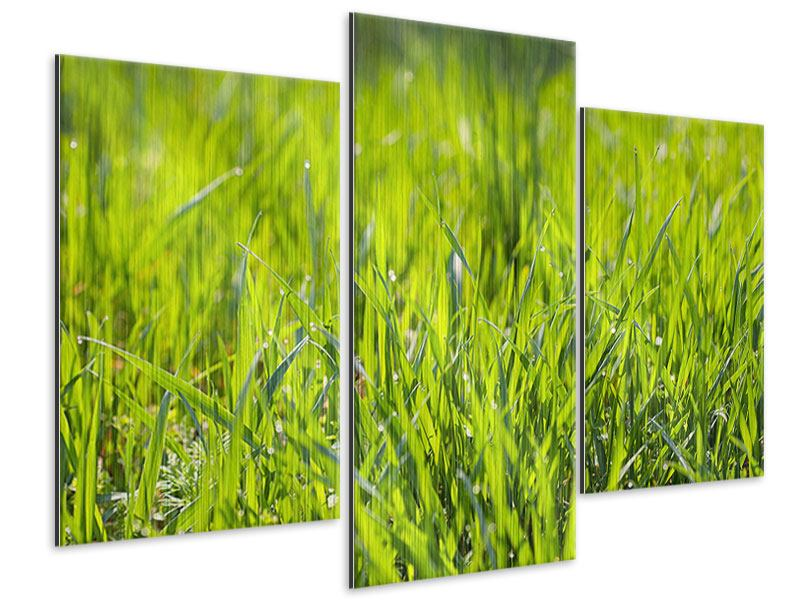 Metallic-Bild 3-teilig modern Gras im Morgentau