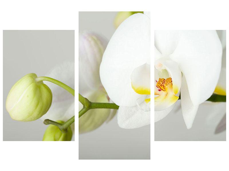Metallic-Bild 3-teilig modern Riesenorchidee
