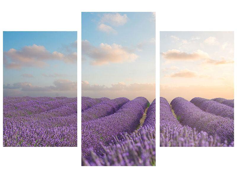 Metallic-Bild 3-teilig modern Das blühende Lavendelfeld