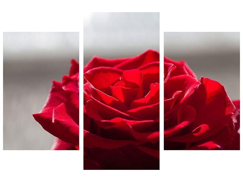 Metallic-Bild 3-teilig modern Rote Rosenblüte