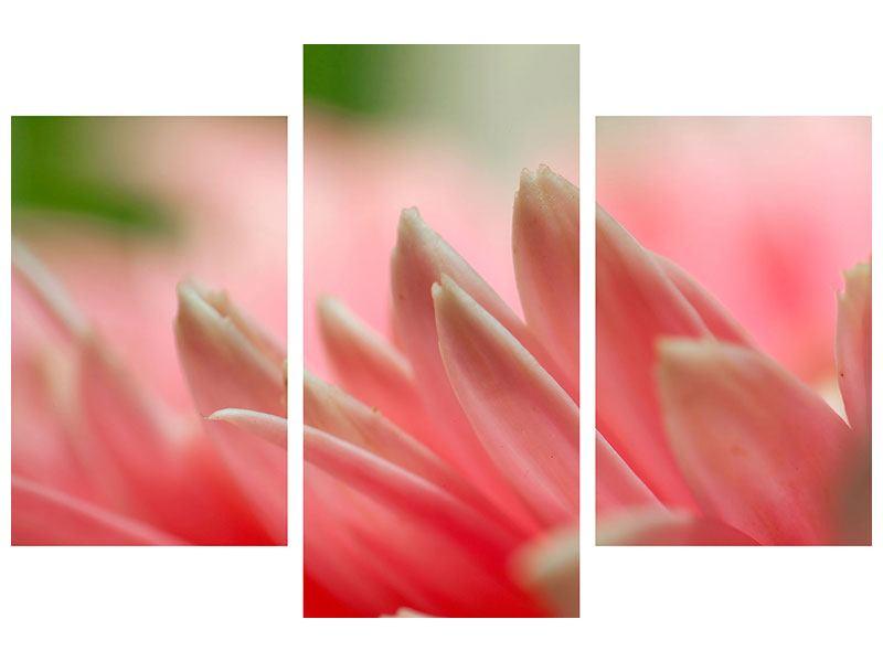 Metallic-Bild 3-teilig modern Close Up einer Blüte