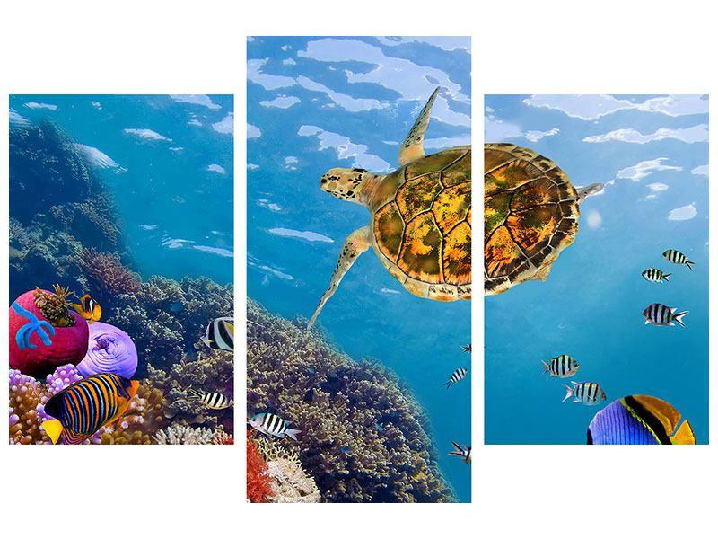 Metallic-Bild 3-teilig modern Die Wasserschildkröte