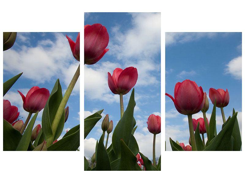 Metallic-Bild 3-teilig modern Tulpen im Himmel