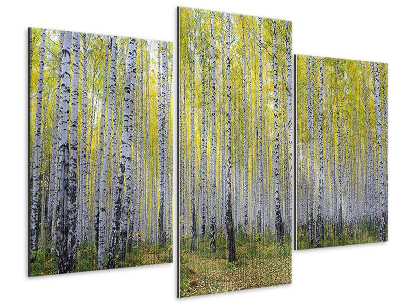 Metallic-Bild 3-teilig modern Herbstlicher Birkenwald