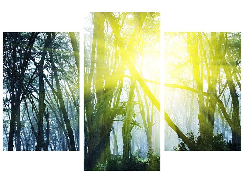 Metallic-Bild 3-teilig modern Sonnenstrahlen im Wald