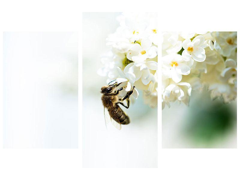 Metallic-Bild 3-teilig modern Die Hummel und die Blüte