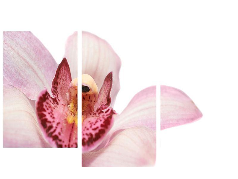 Metallic-Bild 3-teilig modern Orchideenblüte XXL
