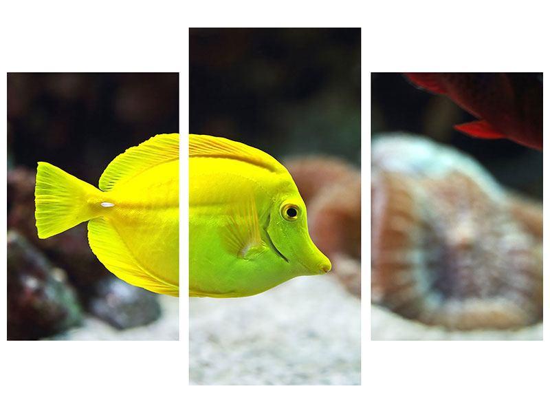 Metallic-Bild 3-teilig modern Segelflossendoktorfisch
