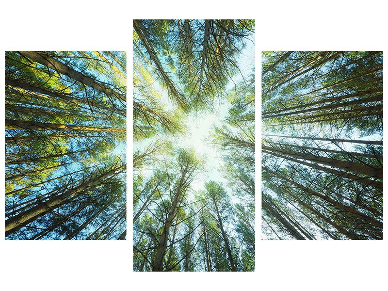 Metallic-Bild 3-teilig modern Kiefernwald