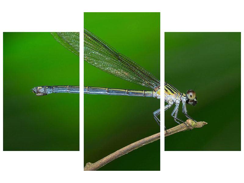 Metallic-Bild 3-teilig modern Die Libelle