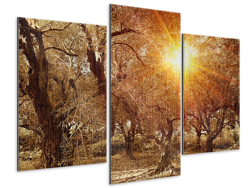 Metallic-Bild 3-teilig modern Olivenbäume im Herbstlicht