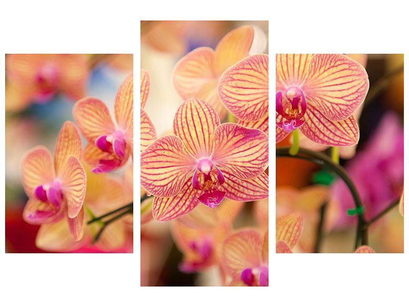 Metallic-Bild 3-teilig modern Exotische Orchideen