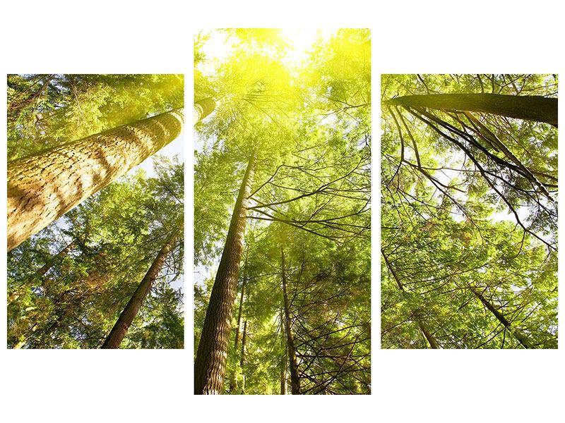Metallic-Bild 3-teilig modern Baumkronen in der Sonne