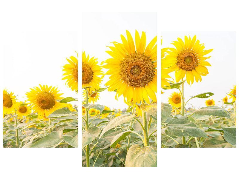 Metallic-Bild 3-teilig modern Das Sonnenblumenfeld