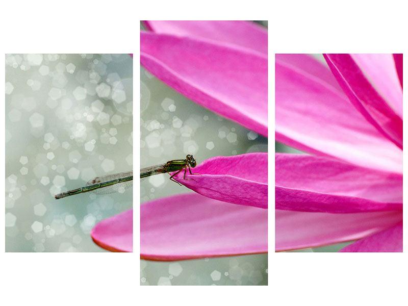 Metallic-Bild 3-teilig modern Libelle auf dem Seerosenblatt