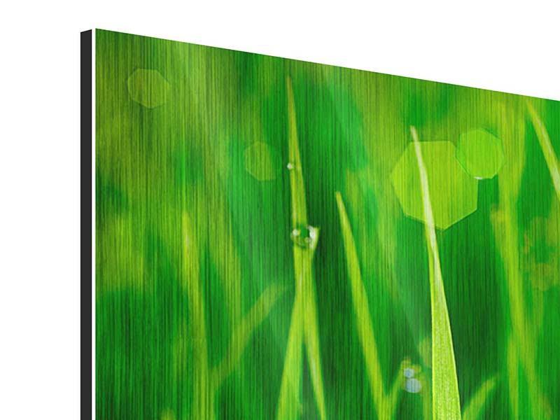 Metallic-Bild 4-teilig modern Gras mit Morgentau