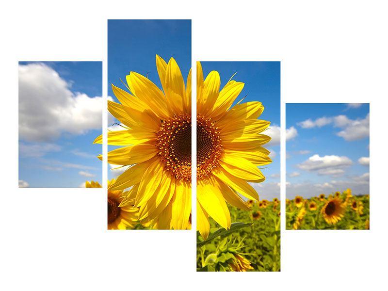 Metallic-Bild 4-teilig modern Das Feld der Sonnenblumen