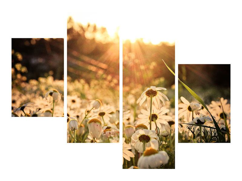 Metallic-Bild 4-teilig modern Gänseblümchen bei Sonnenuntergang