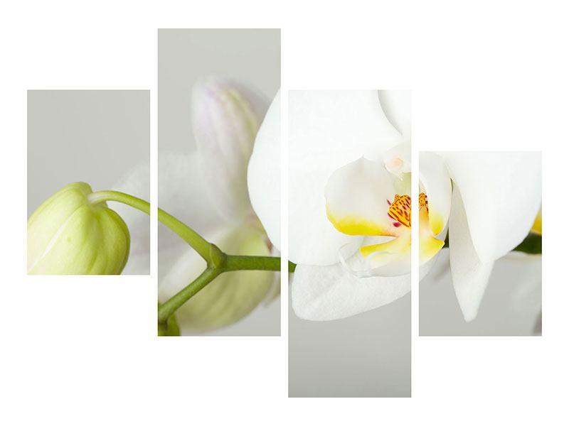 Metallic-Bild 4-teilig modern Riesenorchidee