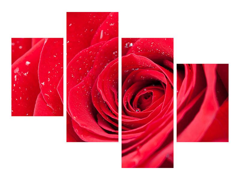 Metallic-Bild 4-teilig modern Rote Rose im Morgentau