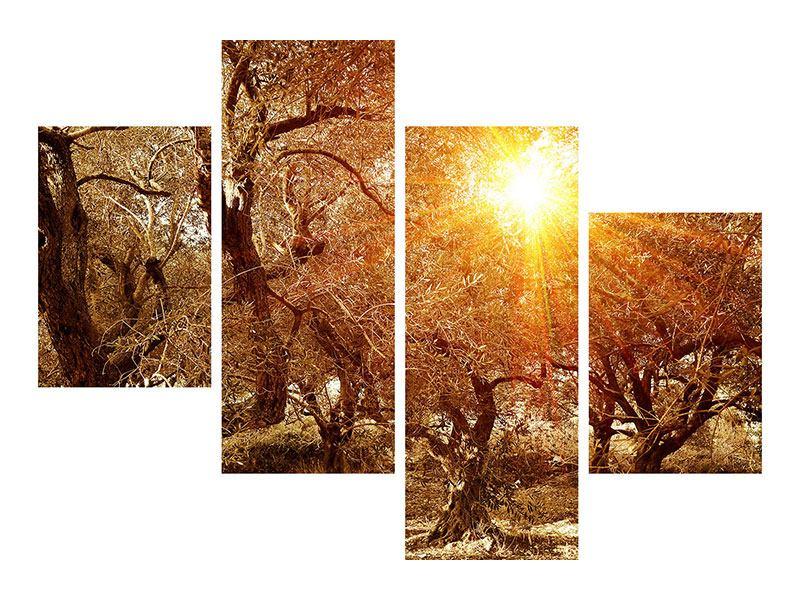 Metallic-Bild 4-teilig modern Olivenbäume im Herbstlicht