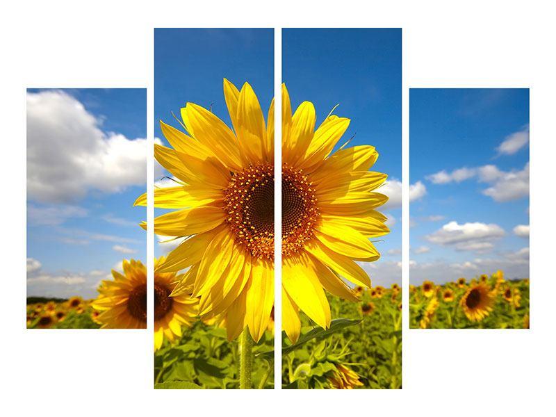 Metallic-Bild 4-teilig Das Feld der Sonnenblumen