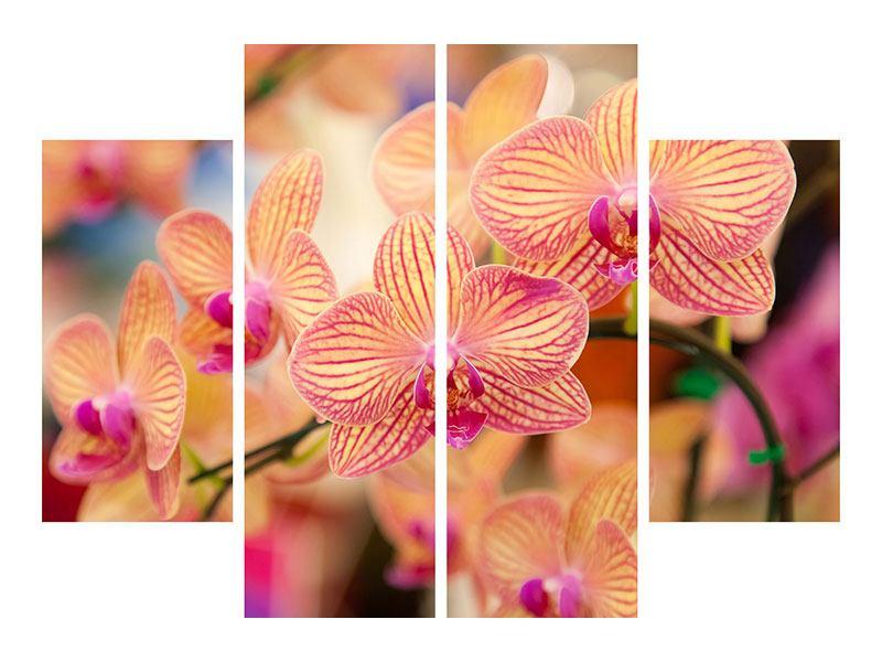 Metallic-Bild 4-teilig Exotische Orchideen