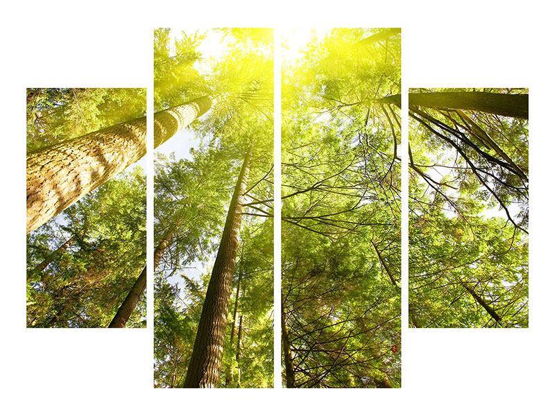 Metallic-Bild 4-teilig Baumkronen in der Sonne