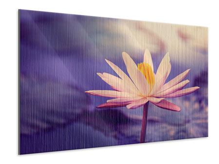 Metallic-Bild Lotus bei Sonnenuntergang