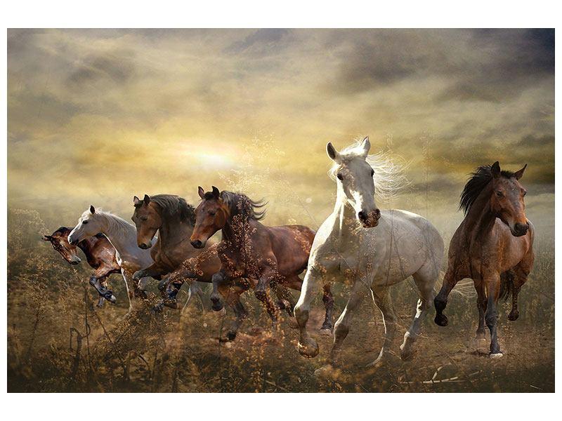 Metallic-Bild Wilde Pferde