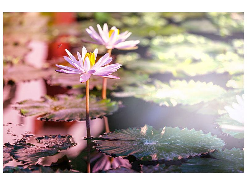 Metallic-Bild Seerosen im Teich