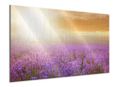 Metallic-Bild Sonnenuntergang beim Lavendelfeld