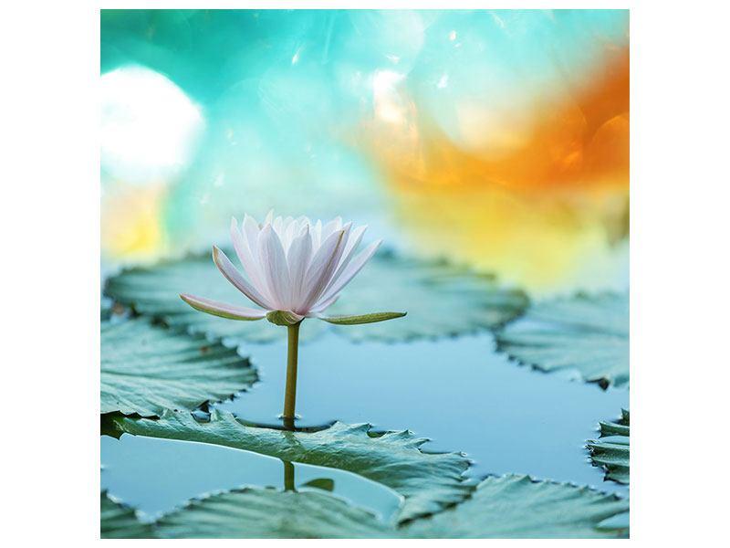 Metallic-Bild Verträumte Lotus