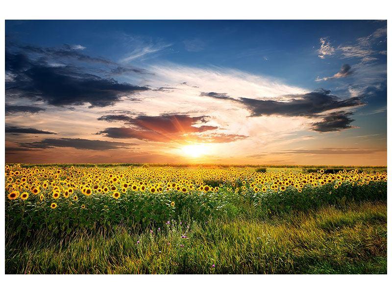Metallic-Bild Ein Feld von Sonnenblumen