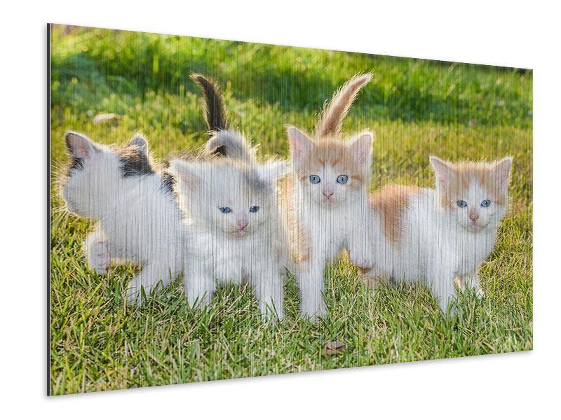 Metallic-Bild Katzenbabys