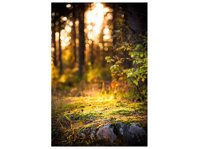 Metallic-Bild Der Wald im Hintergrund