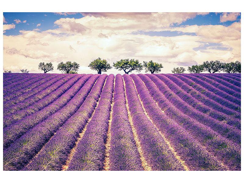 Metallic-Bild Das Lavendelfeld