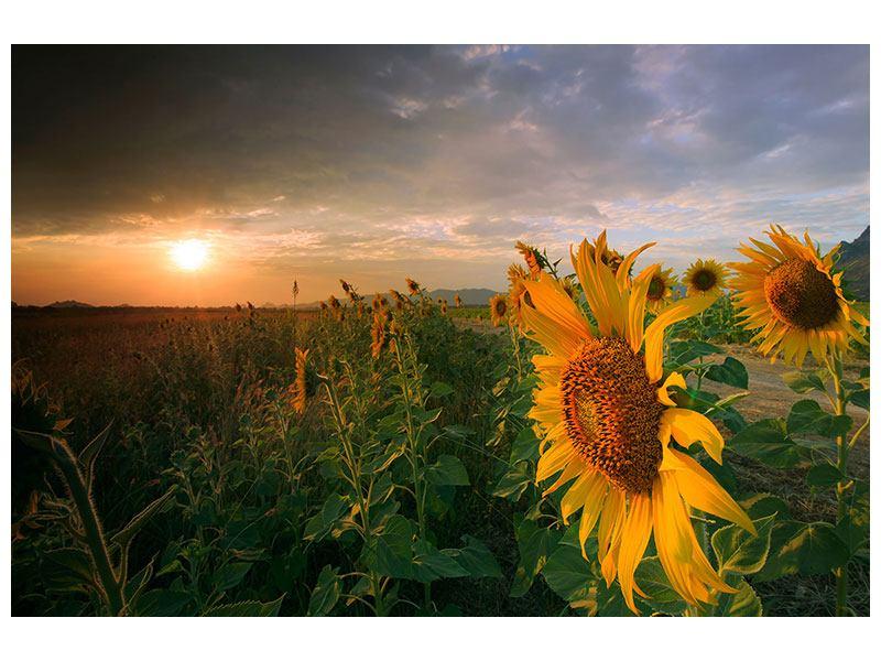 Metallic-Bild Sonnenblumen im Lichtspiel