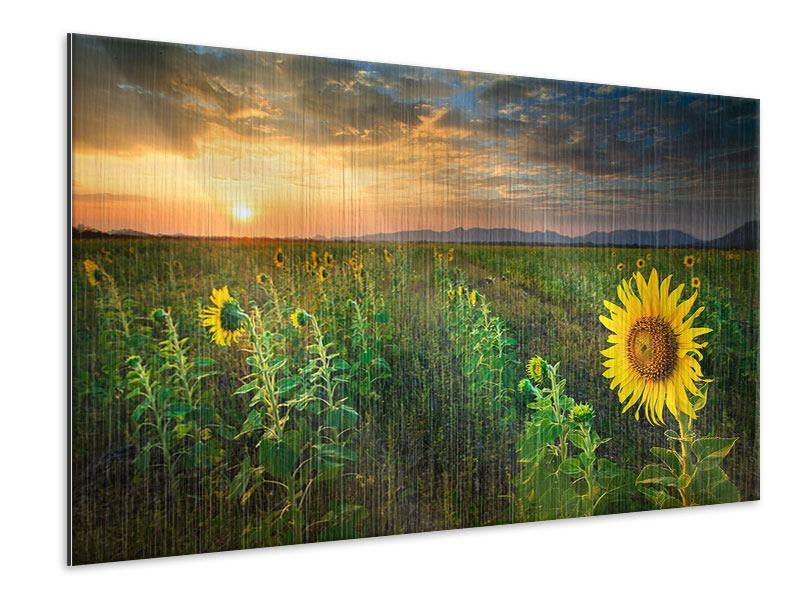Metallic-Bild Sonnenblumenfeld im Abendrot