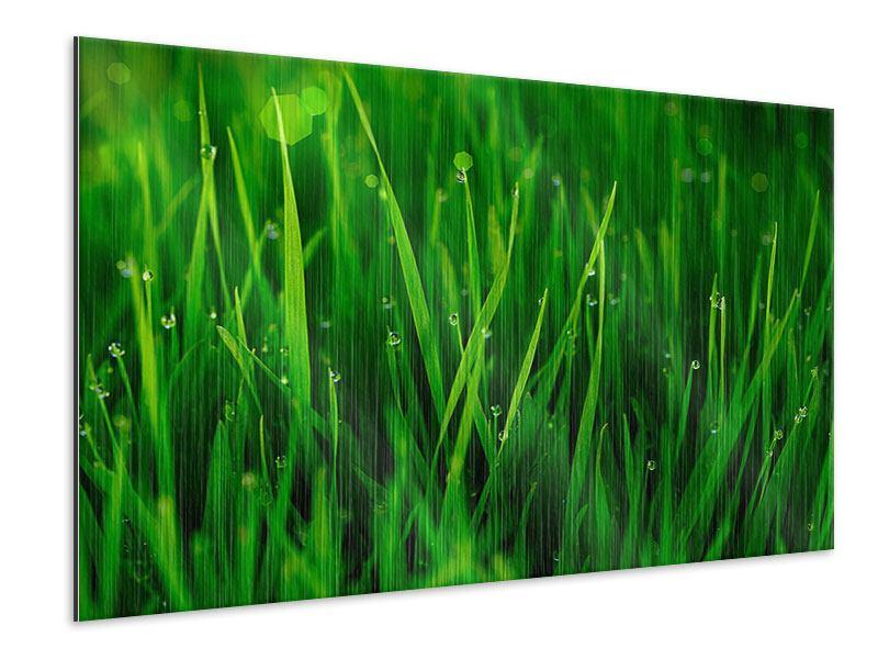 Metallic-Bild Gras mit Morgentau