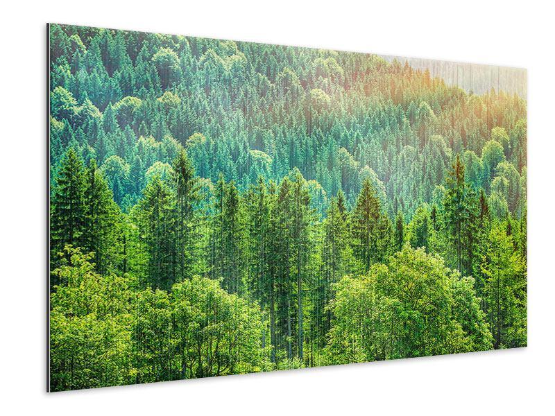 Metallic-Bild Der Waldhügel