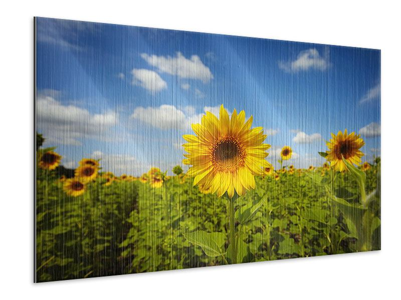 Metallic-Bild Sommer-Sonnenblumen