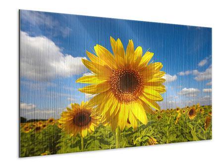 Metallic-Bild Das Feld der Sonnenblumen