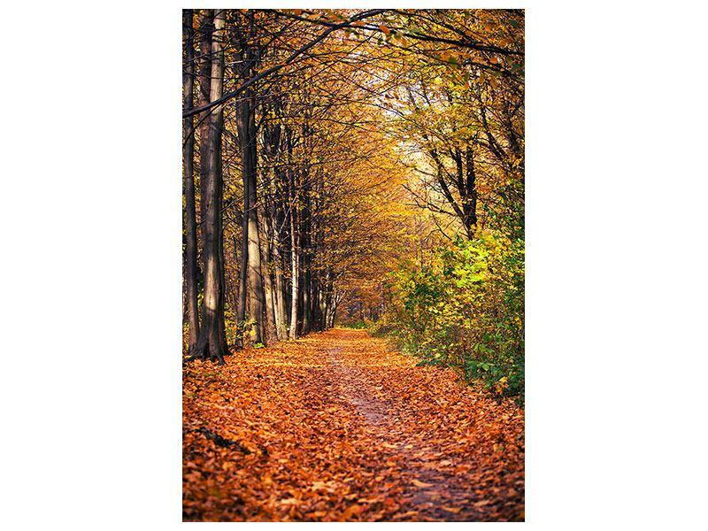 Metallic-Bild Laubwald im Herbstlicht
