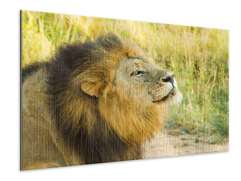 Metallic-Bild Der König der Tiere