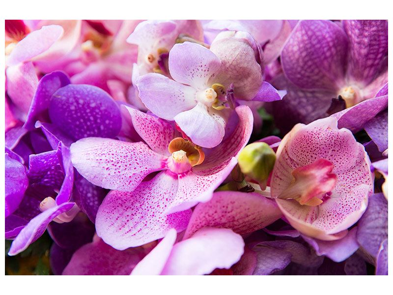 Metallic-Bild Im Orchideenparadies
