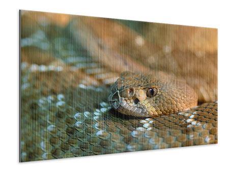 Metallic-Bild Viper