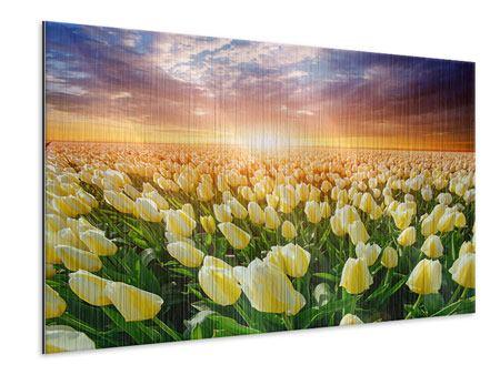 Metallic-Bild Sonnenaufgang bei den Tulpen
